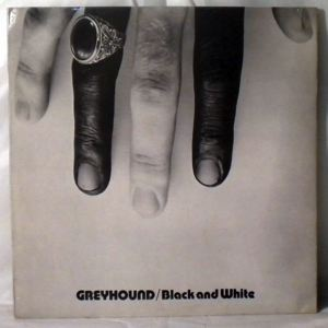 Greyhound Black and white
